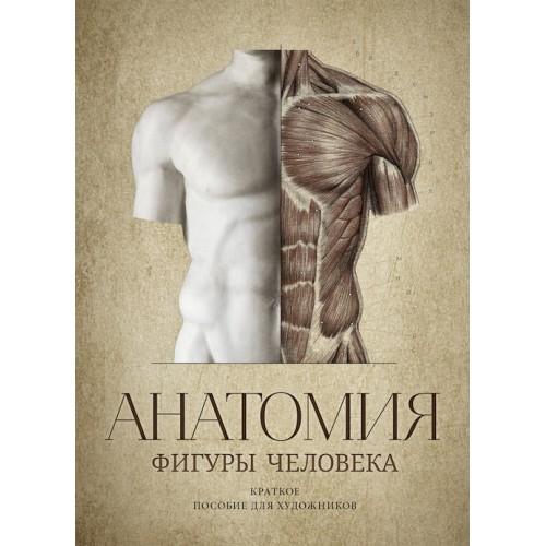 Анатомия фигуры человека - В.А. Могилевцев